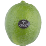 Branded lime. No Dolphin detail goes unnoticed!